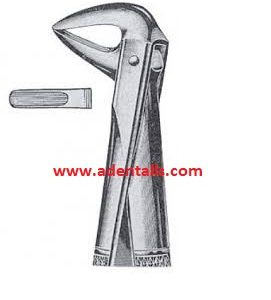 Lower Incisors & Root Forceps